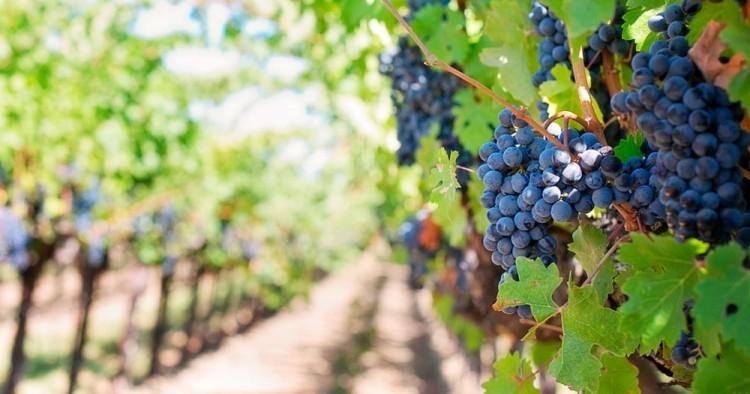 Financiarán tesis de posgrado sobre vitivinicultura