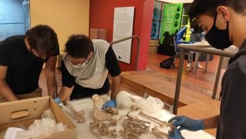 Bioarqueología: Se realizó una actividad de análisis y reconocimiento de restos óseos