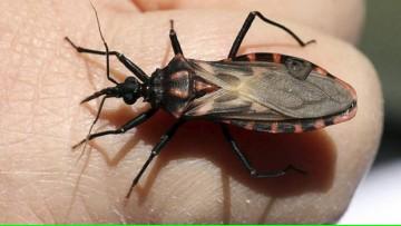 Curso Geografía del mal de Chagas: Conociendo los riesgos, su prevención y control